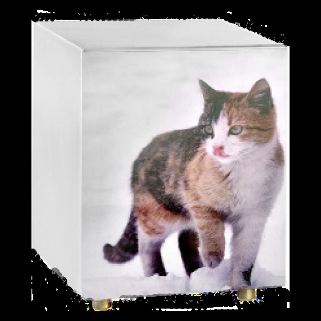 Urna con foto (gatto)
